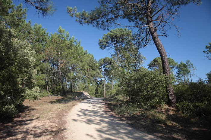 Forêt St Jean de Monts